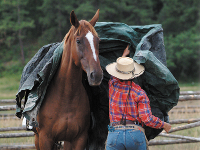A tarp can be a good horse training tool to help with distractions